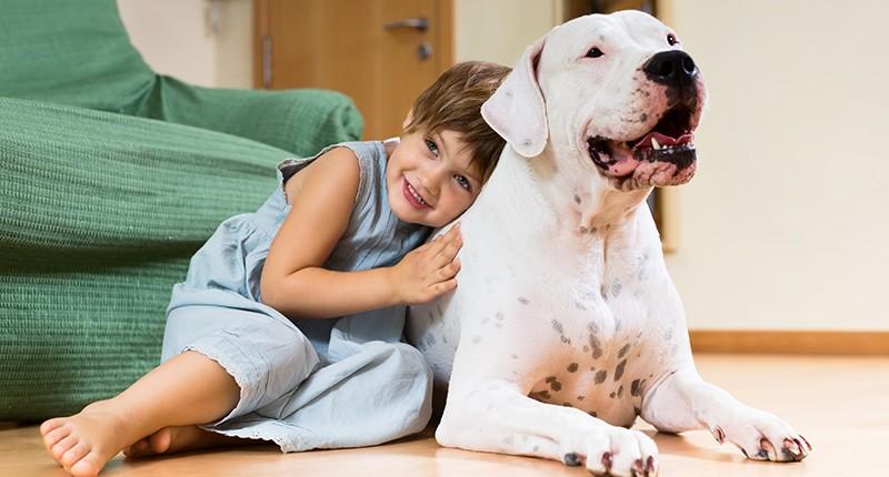 El alquiler con mascotas: Problemas y soluciones